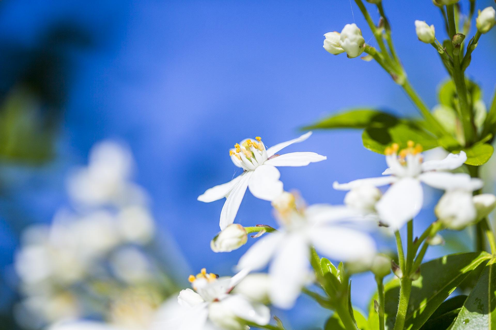 domainedablon_exterieurs_printemps©stephaneleroy-4137.jpg