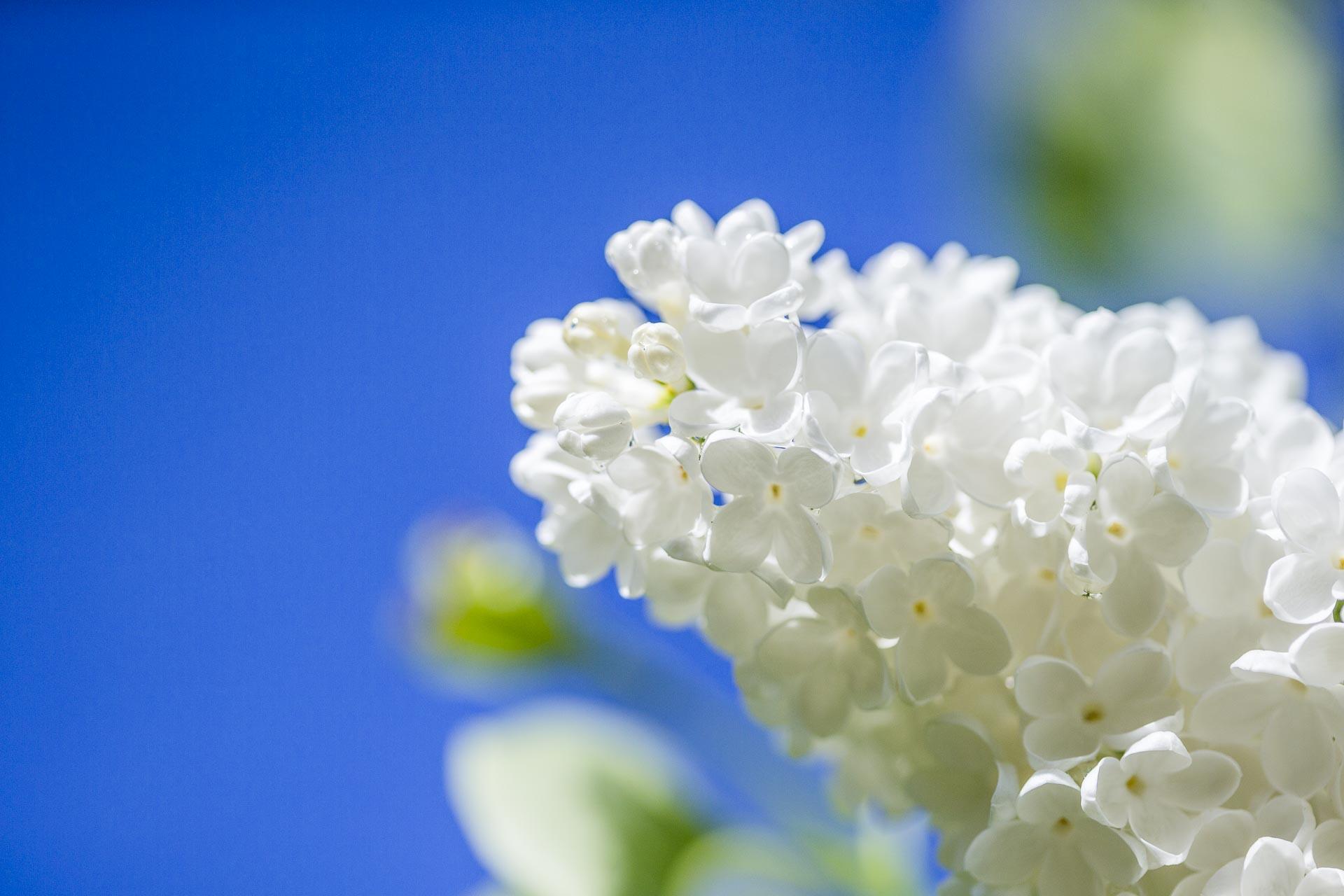 domainedablon_exterieurs_printemps©stephaneleroy-4146.jpg
