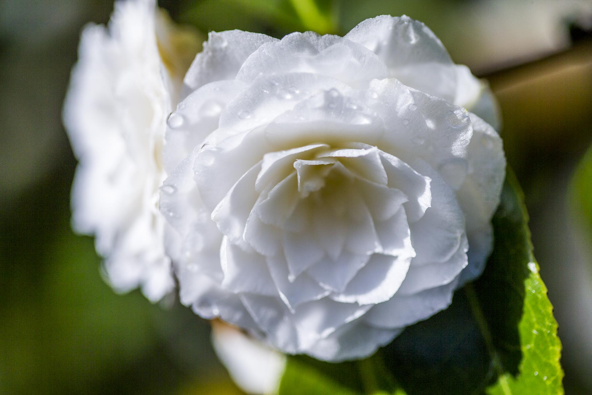 domainedablon_exterieurs_printemps©stephaneleroy-4085.jpg