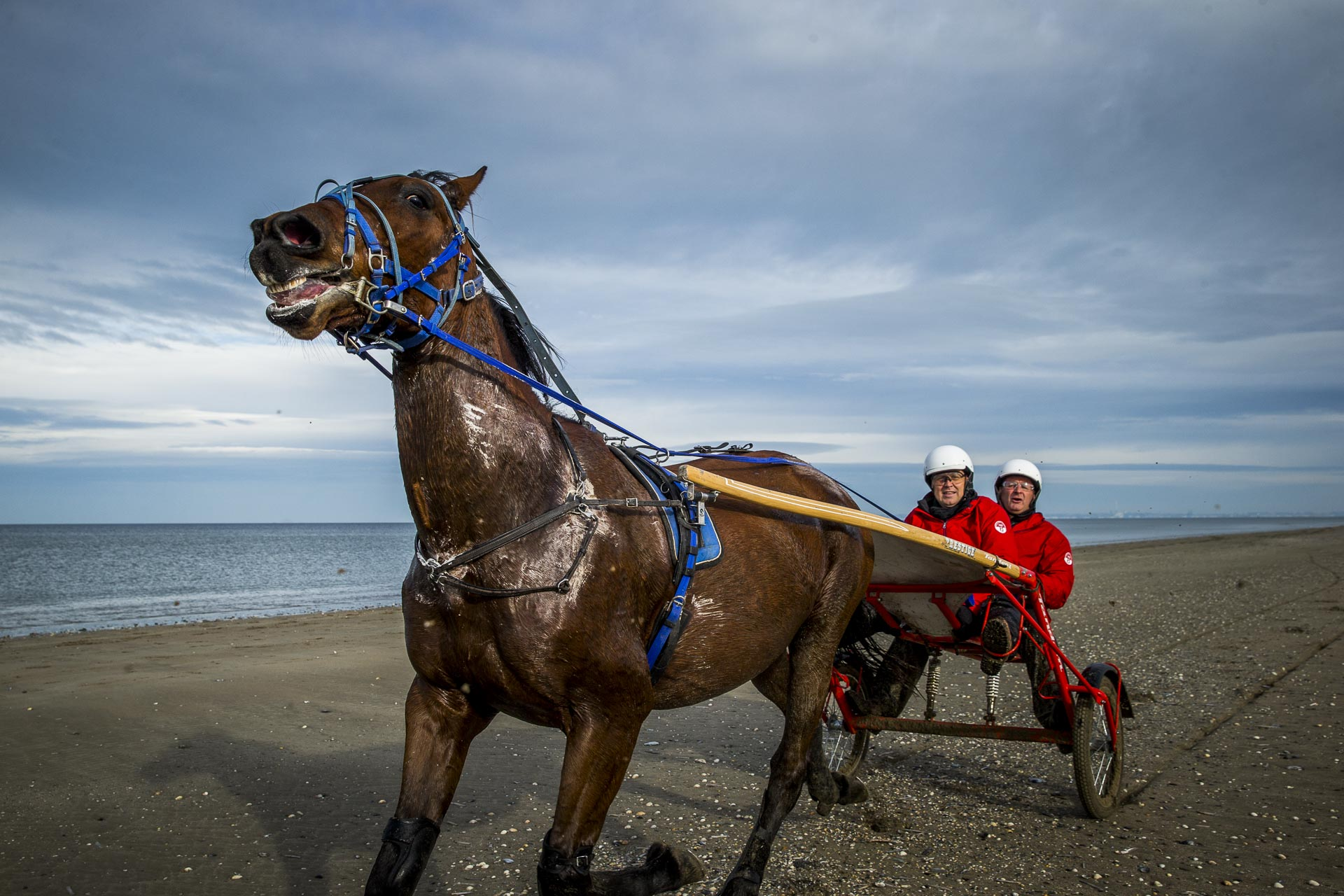 Sulky driving on the beach at Deauville