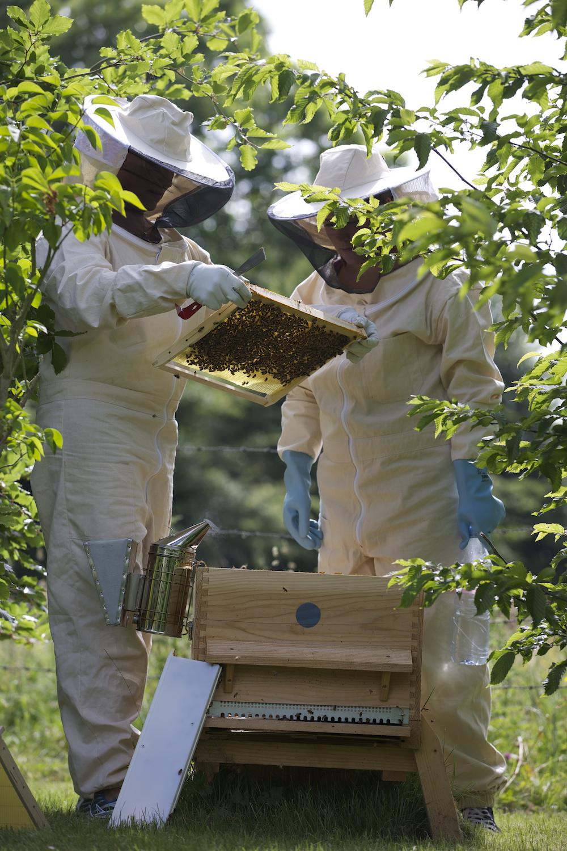 les ruches du domaine