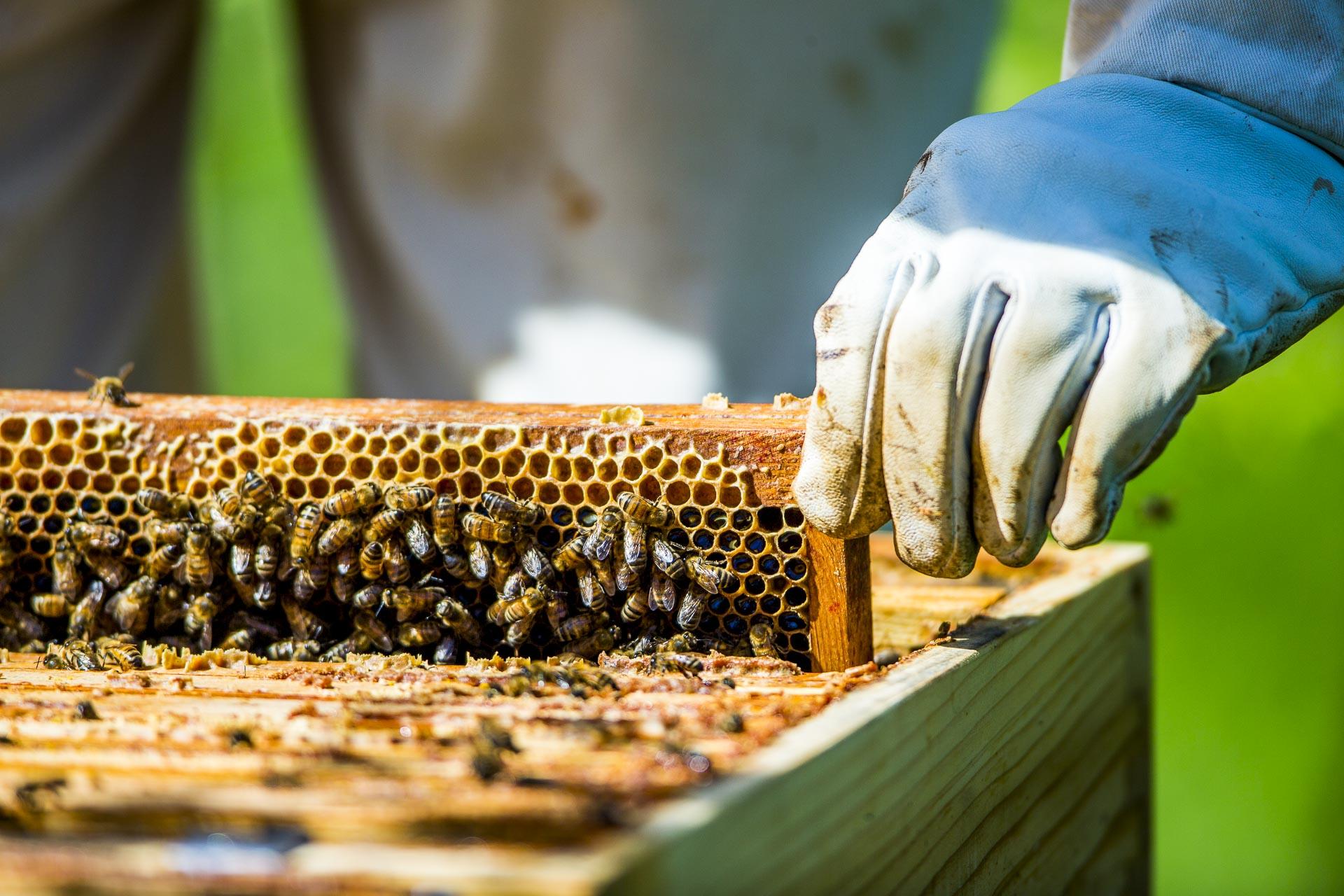 découverte des ruches du domaine