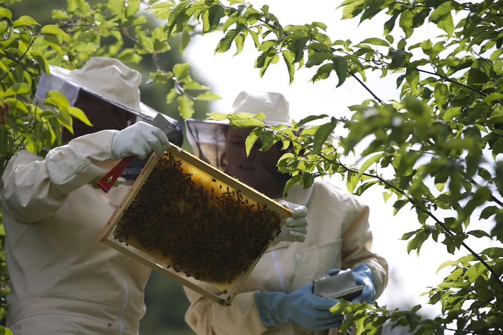 domaine-dablon-activite-ruches-abeilles-F69P0262.jpg