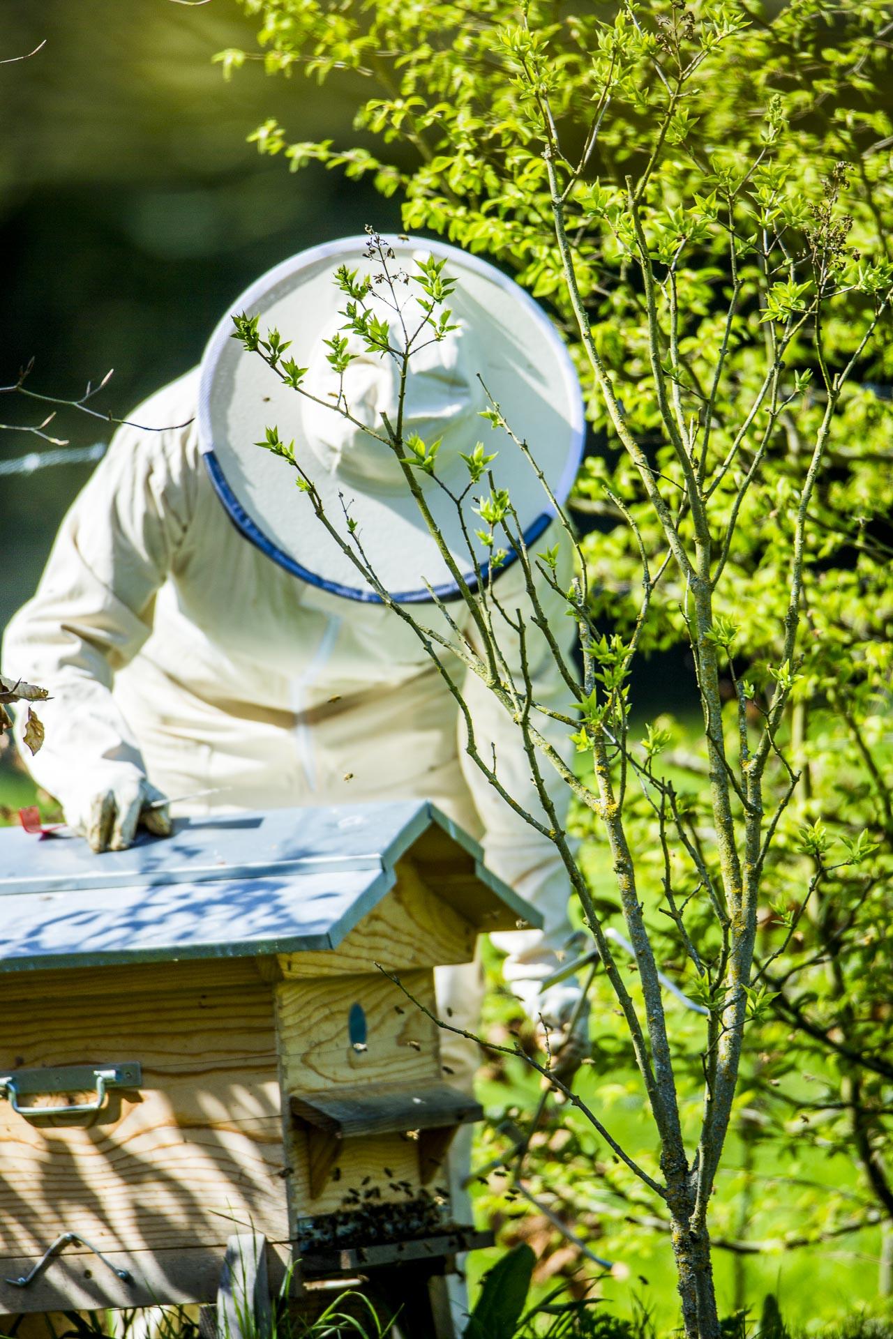 domaine_dablon_activites_ruches_abeilles©stephaneleroy-3158.jpg