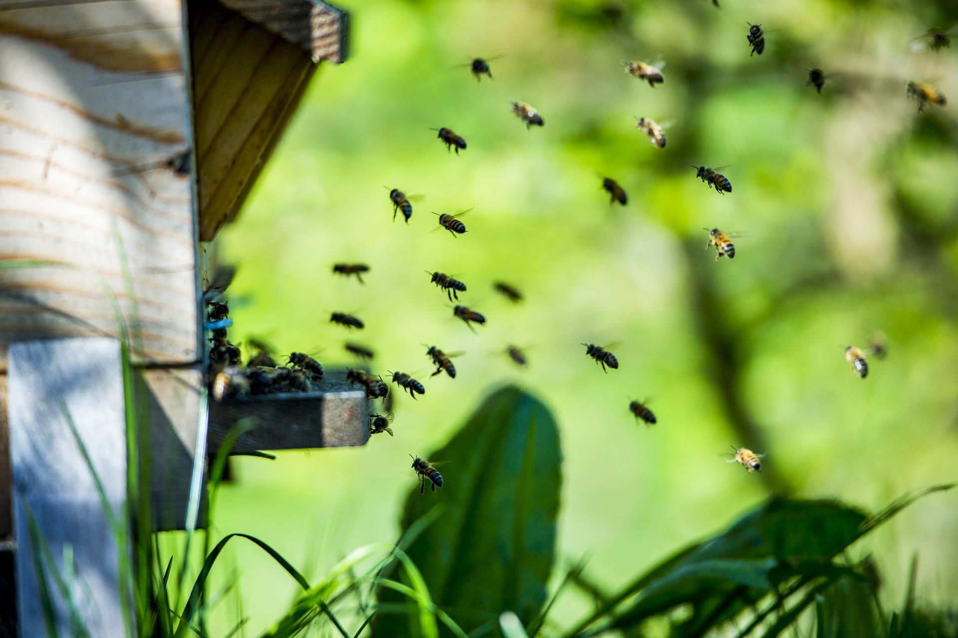 découverte des abeilles du domaine