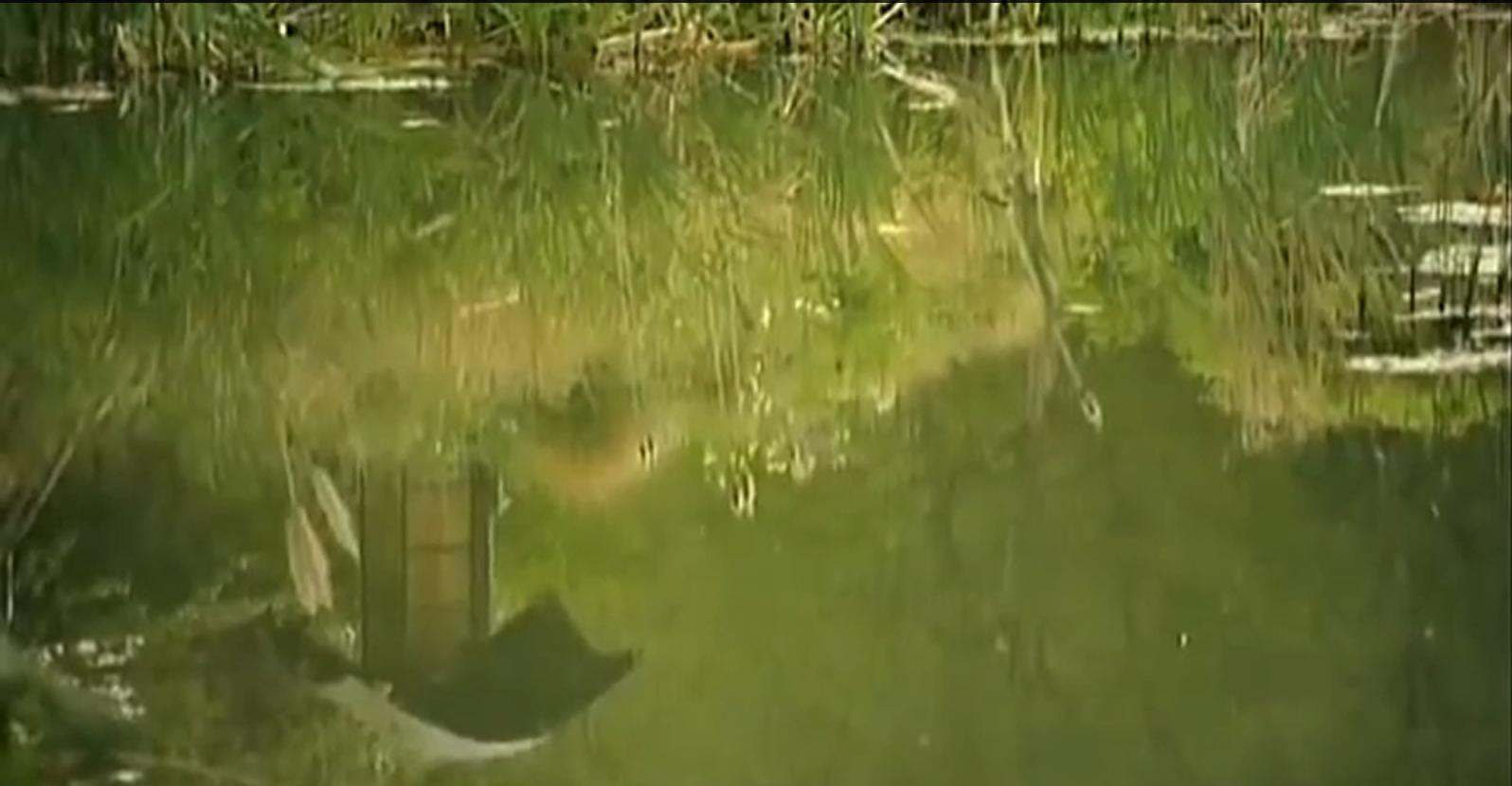 "2007 ""Amigasamon"" Abbey House Gardens, Malmesbury. Image BBC Countryfile."