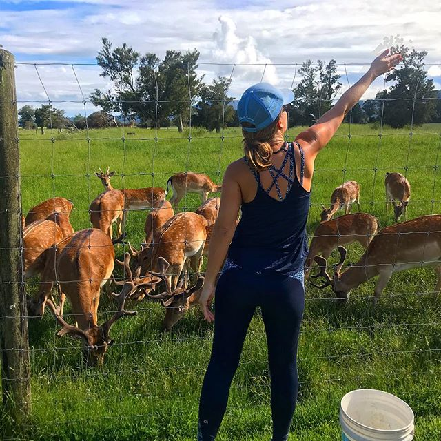 Feeding the reindeer to get them ready for the big night... . #myhousefirstplease  #christmasiscoming #vacationforever #yearoftravel