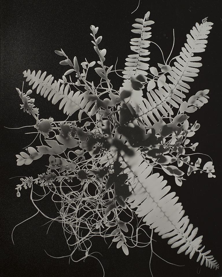 solarized photogram  silver gelatin print  2017