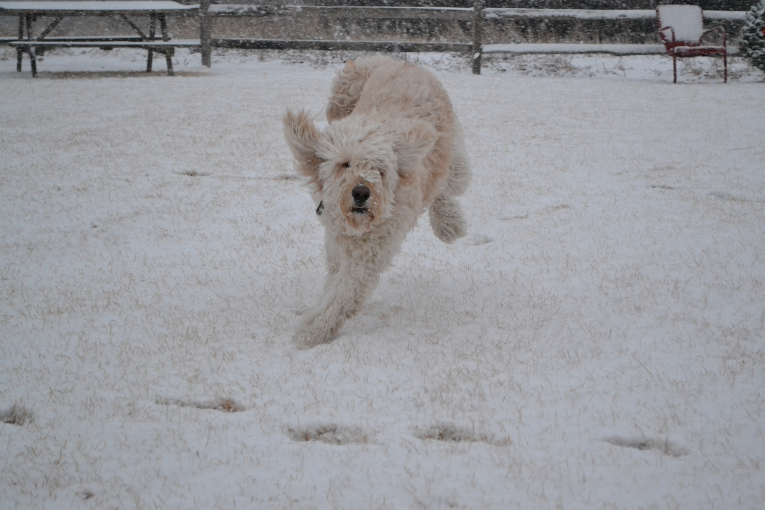 """Costello training for what he calls the Idoodlerod. """"Look out! Comin' in hot!"""""""