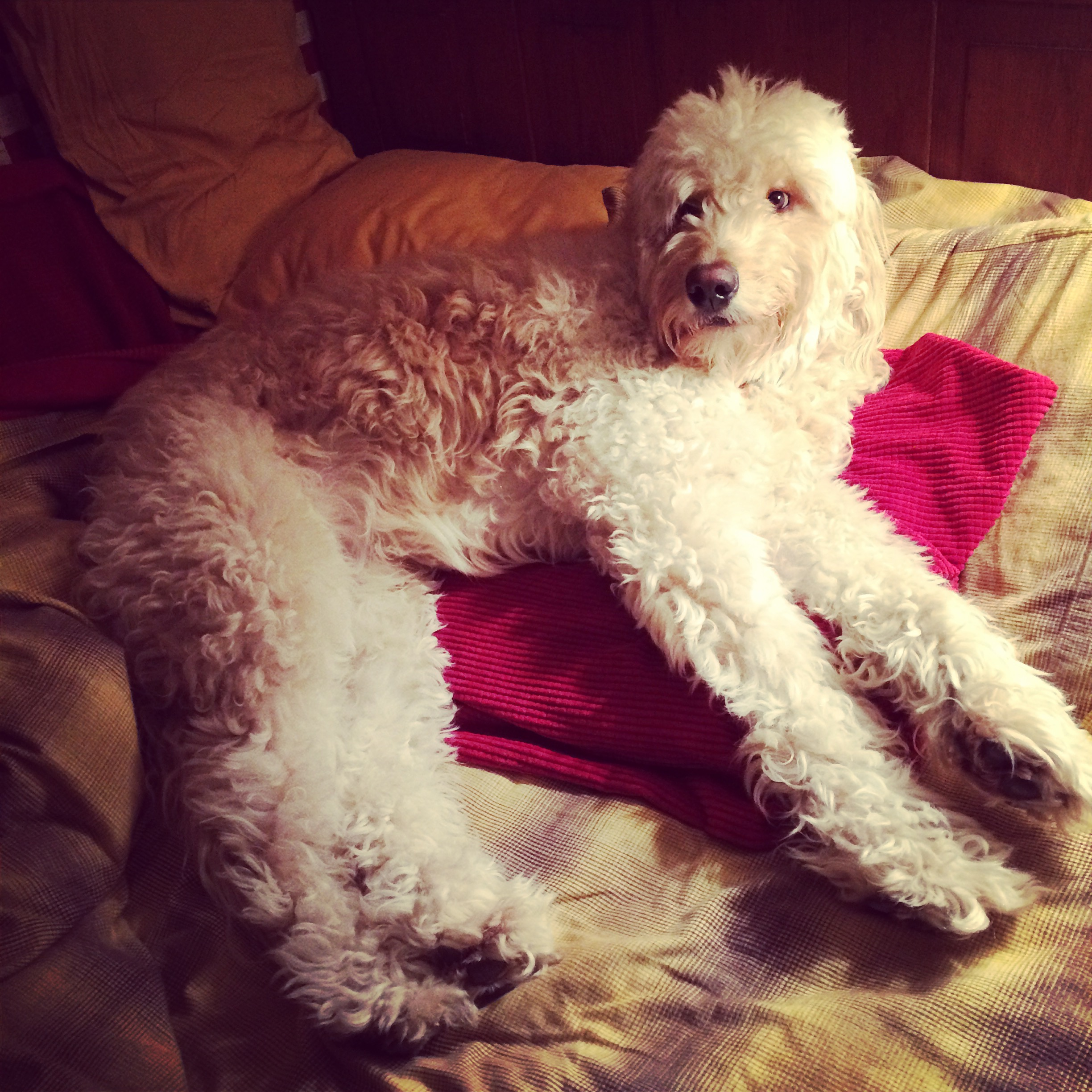 """We search the house and find Costello already in bed. He seems to have little patience for late-night television. """"He's no Johnny Carson, I'll tell you that much!"""""""