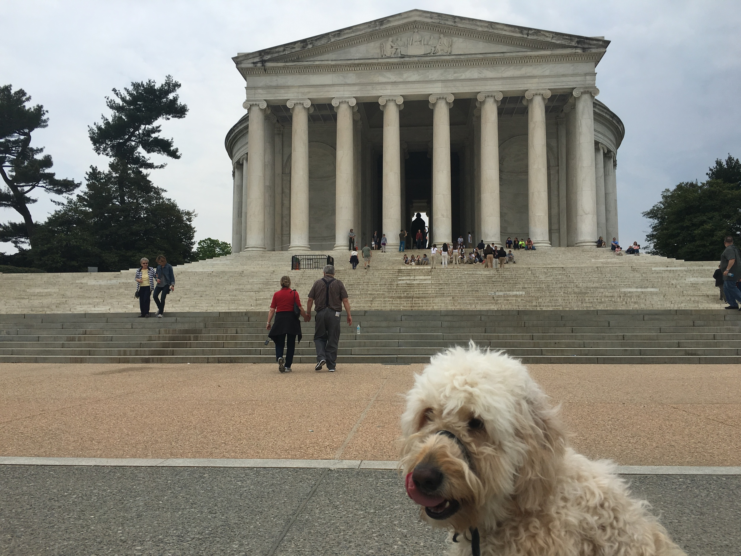 Licking his chops at the Jefferson Monument.