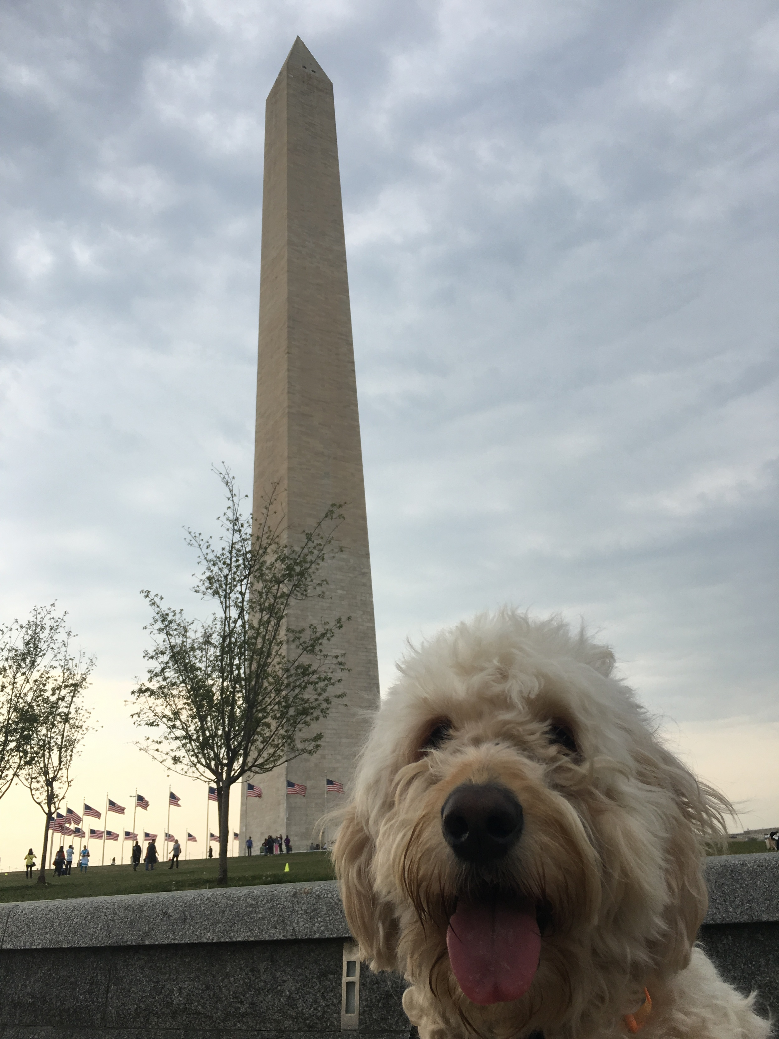 Costello visited all of the monuments at the National Mall with us in D.C. And he got plenty of attention for doing it, too. Here he is at the Washington Monument.