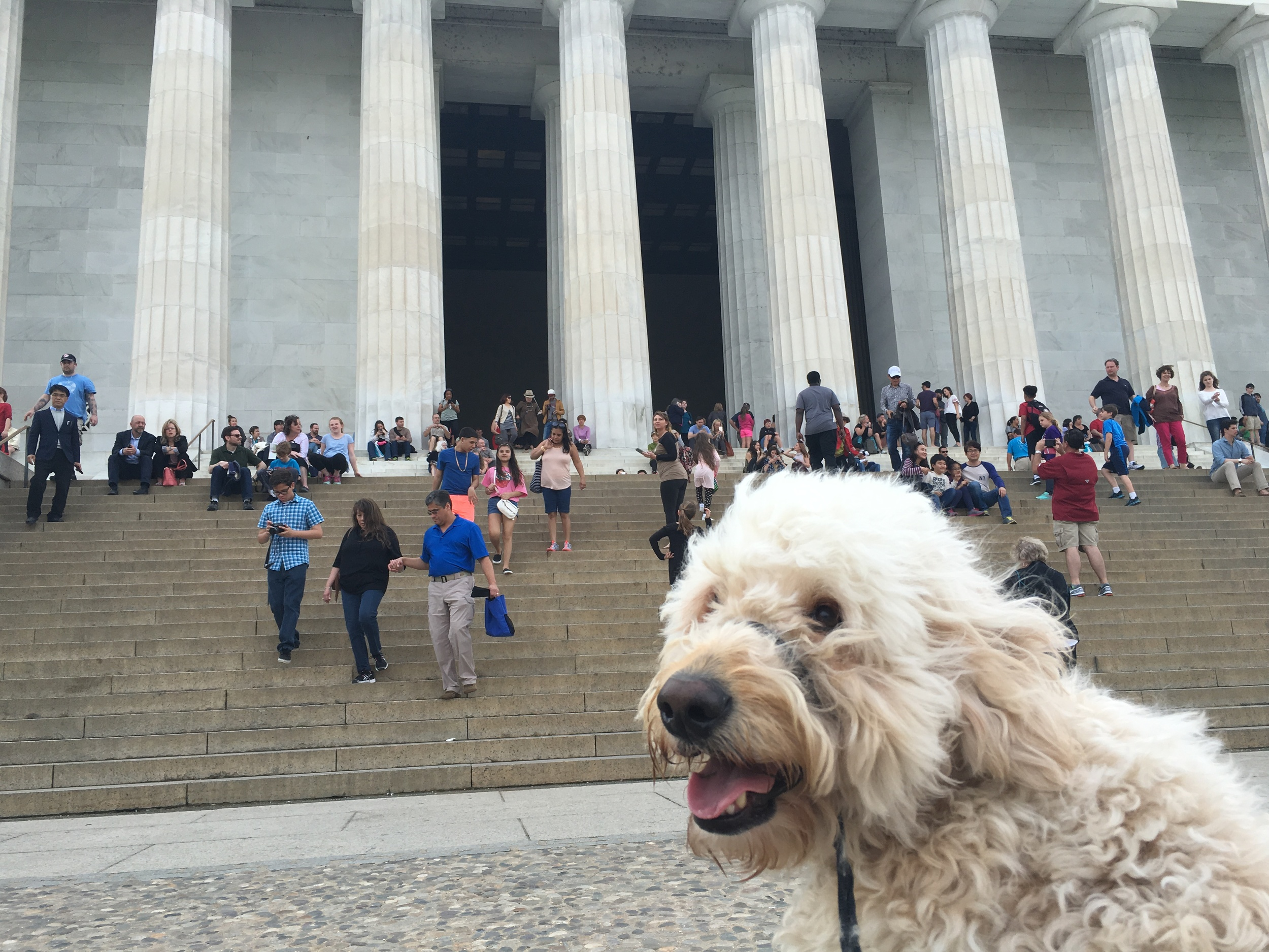 Here he is at the steps of the Lincoln Monument. He was the star of many photos here.
