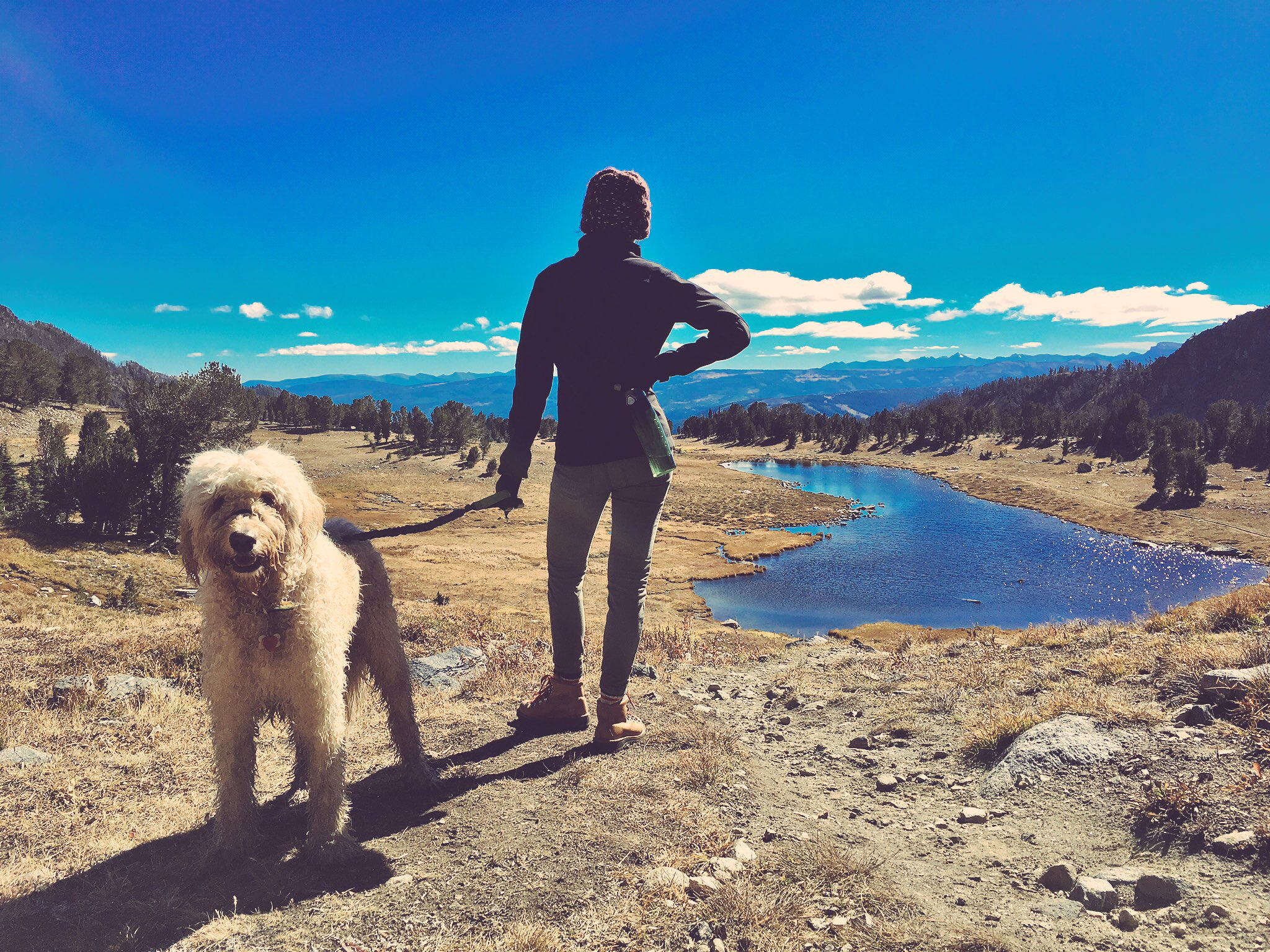 Travel Destinations That'll Make Their Tails Wag | Local Color XC