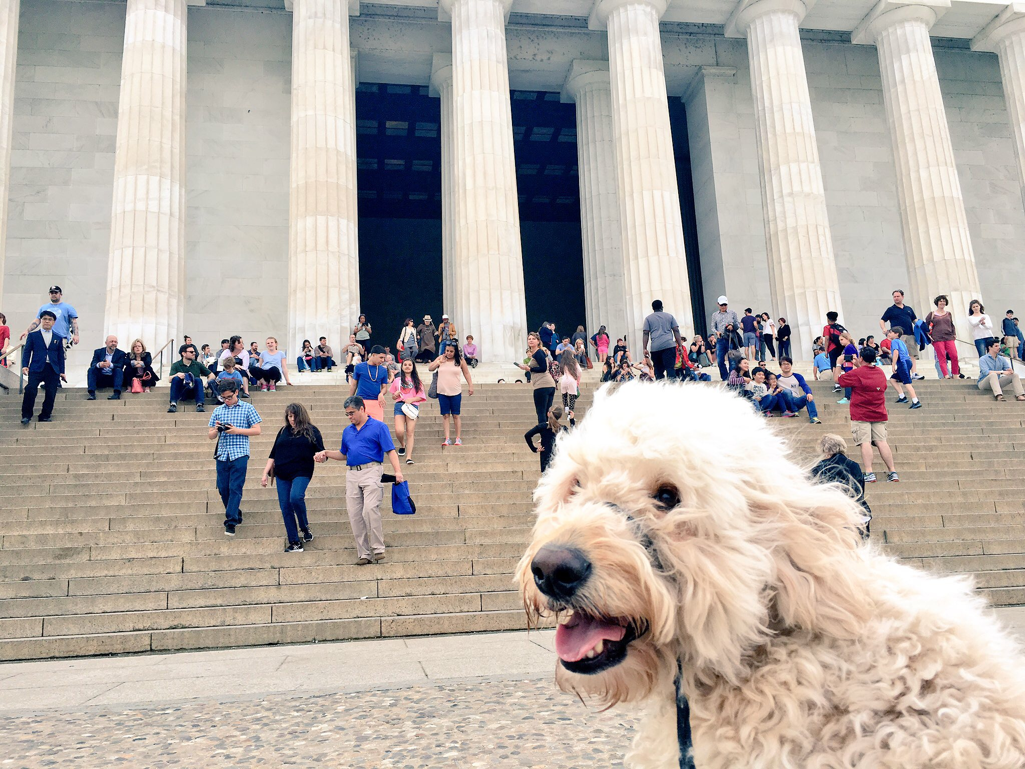 Lucky dog -- he even got to see the Lincoln Memorial (from afar, of course).