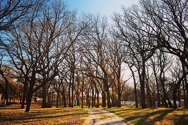 Another shot from the Historic Mars Campground in Antelope County, Nebraska. These scraggly burr oak trees provide a great habitat for birds and wild game, and maybe a traveler or two looking for a secluded campsite.