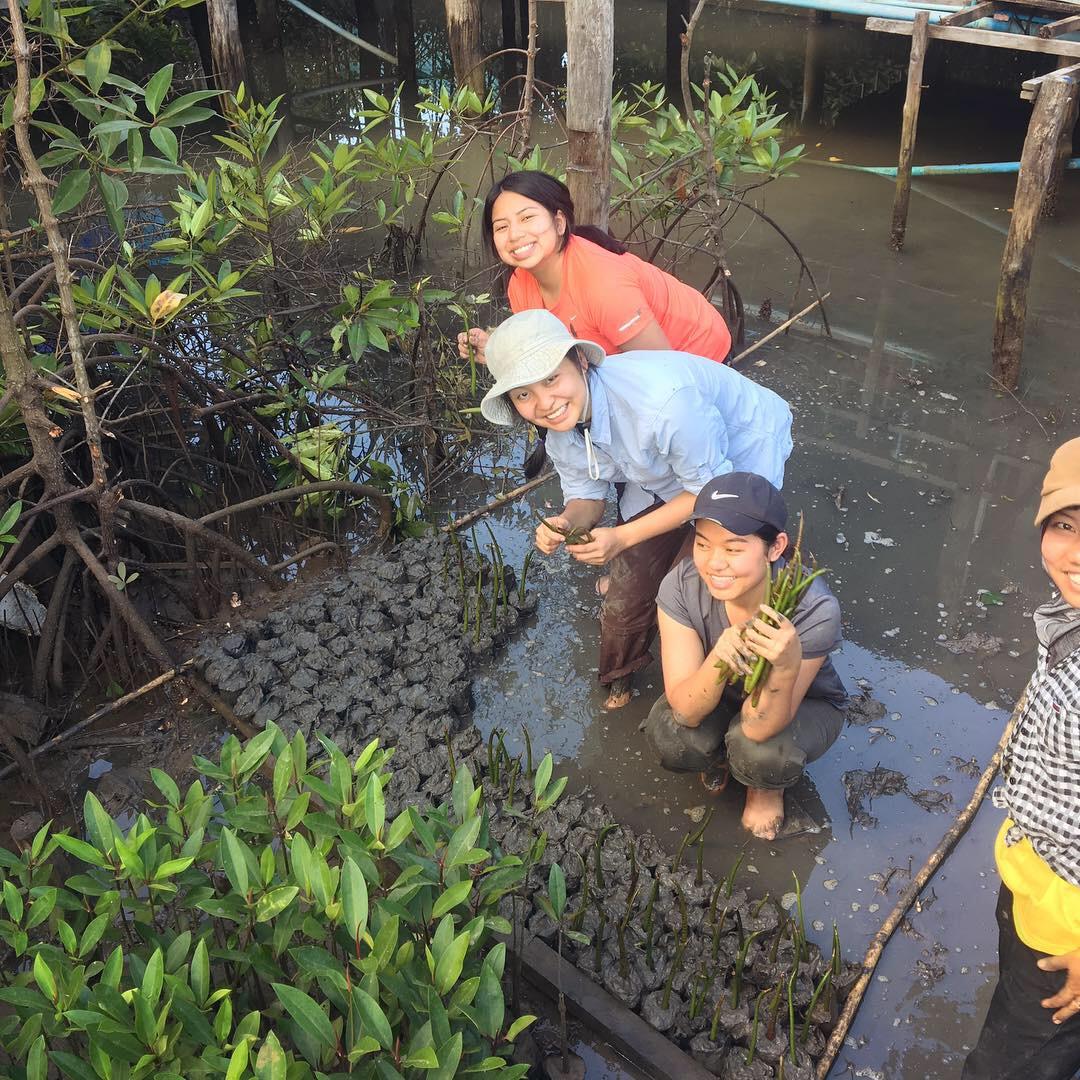 Leum dtaa mangroves 2 .jpeg