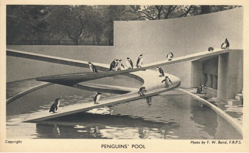 7-penguinspool.jpg