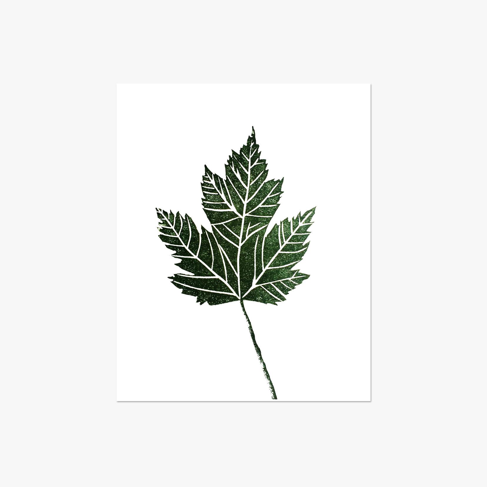 """Maple Leaf - 5x7"""""""