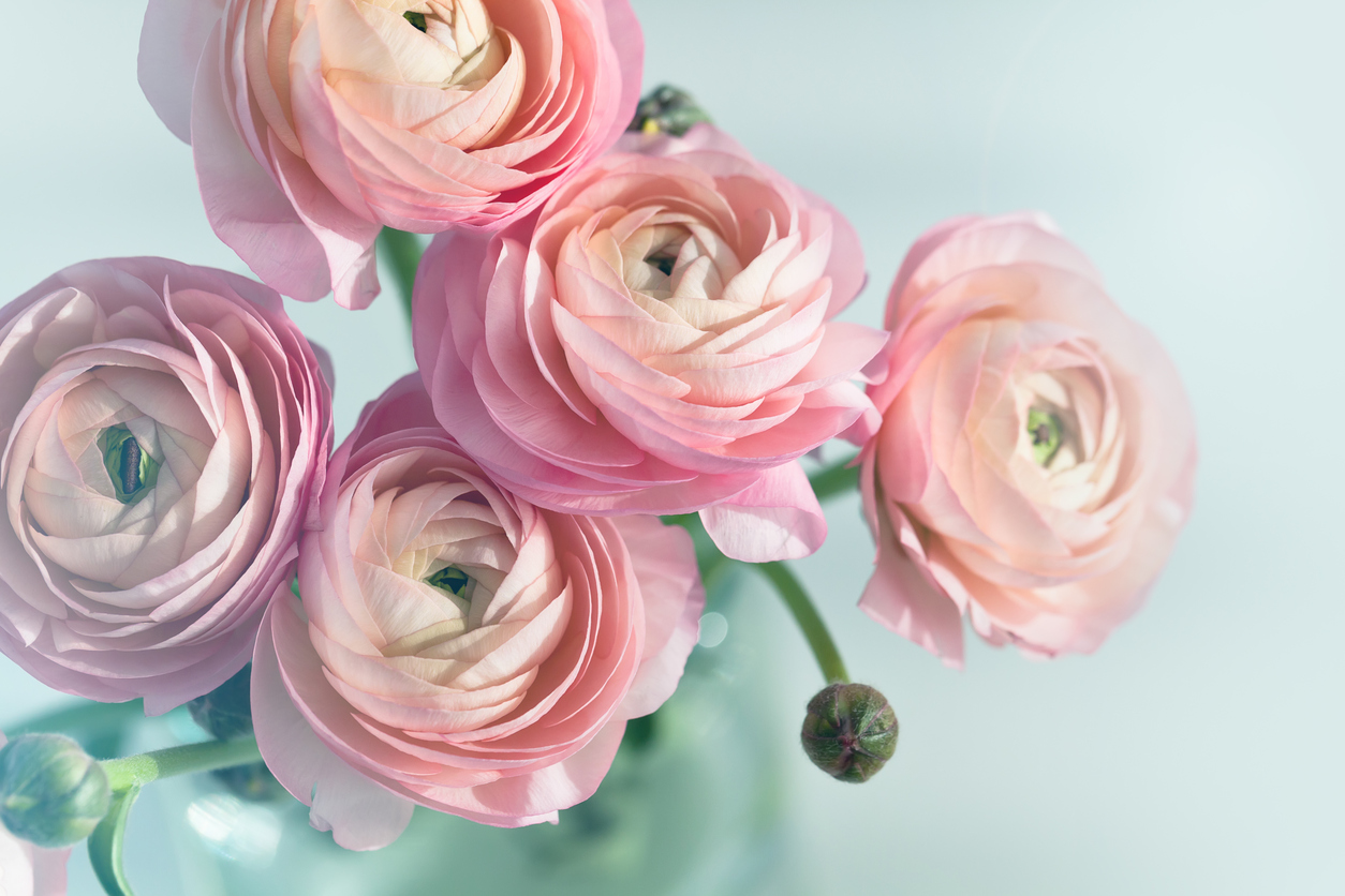 Flowers BPD.jpg