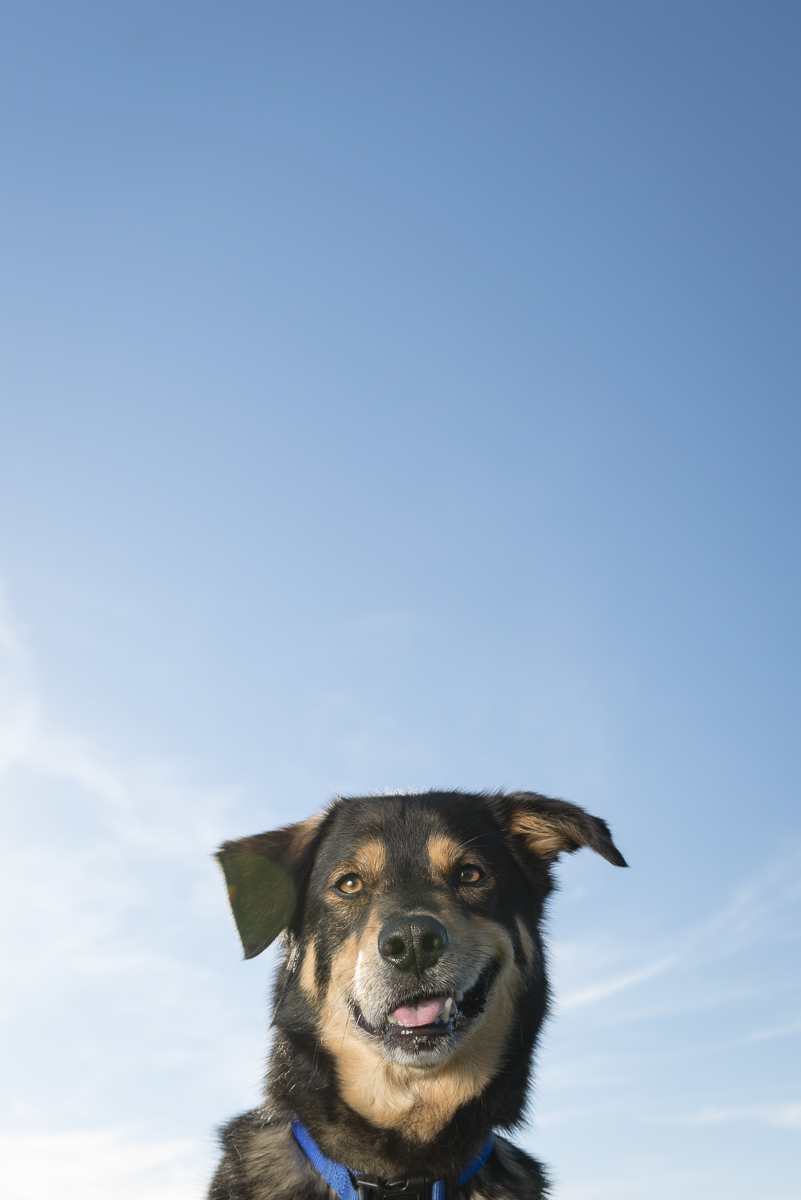 Funny dog photo taken against the blue sky