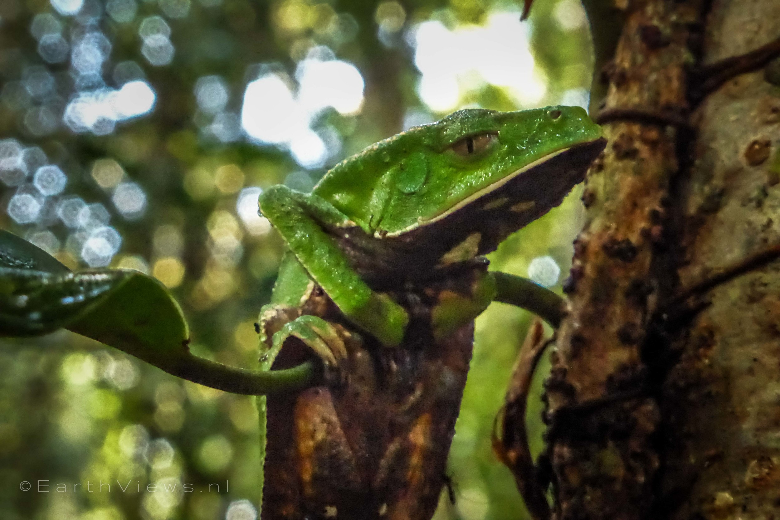 An 'undiscovered' – or uncatalogued – frog.