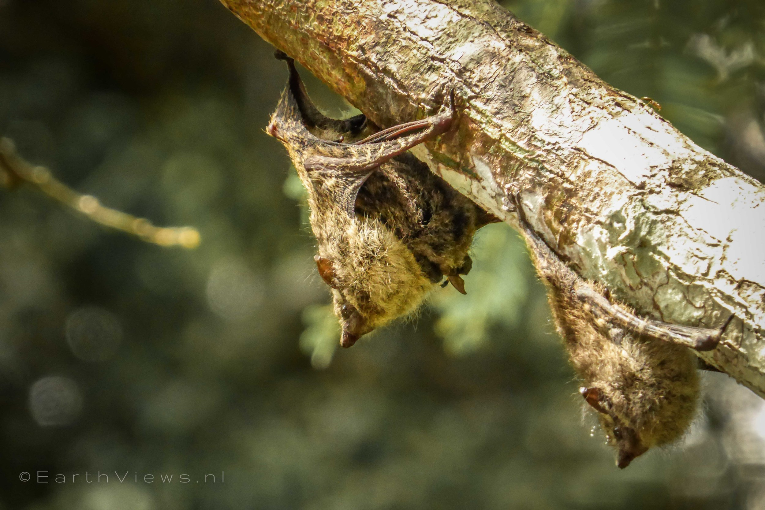 Mother and baby bat (on the left).