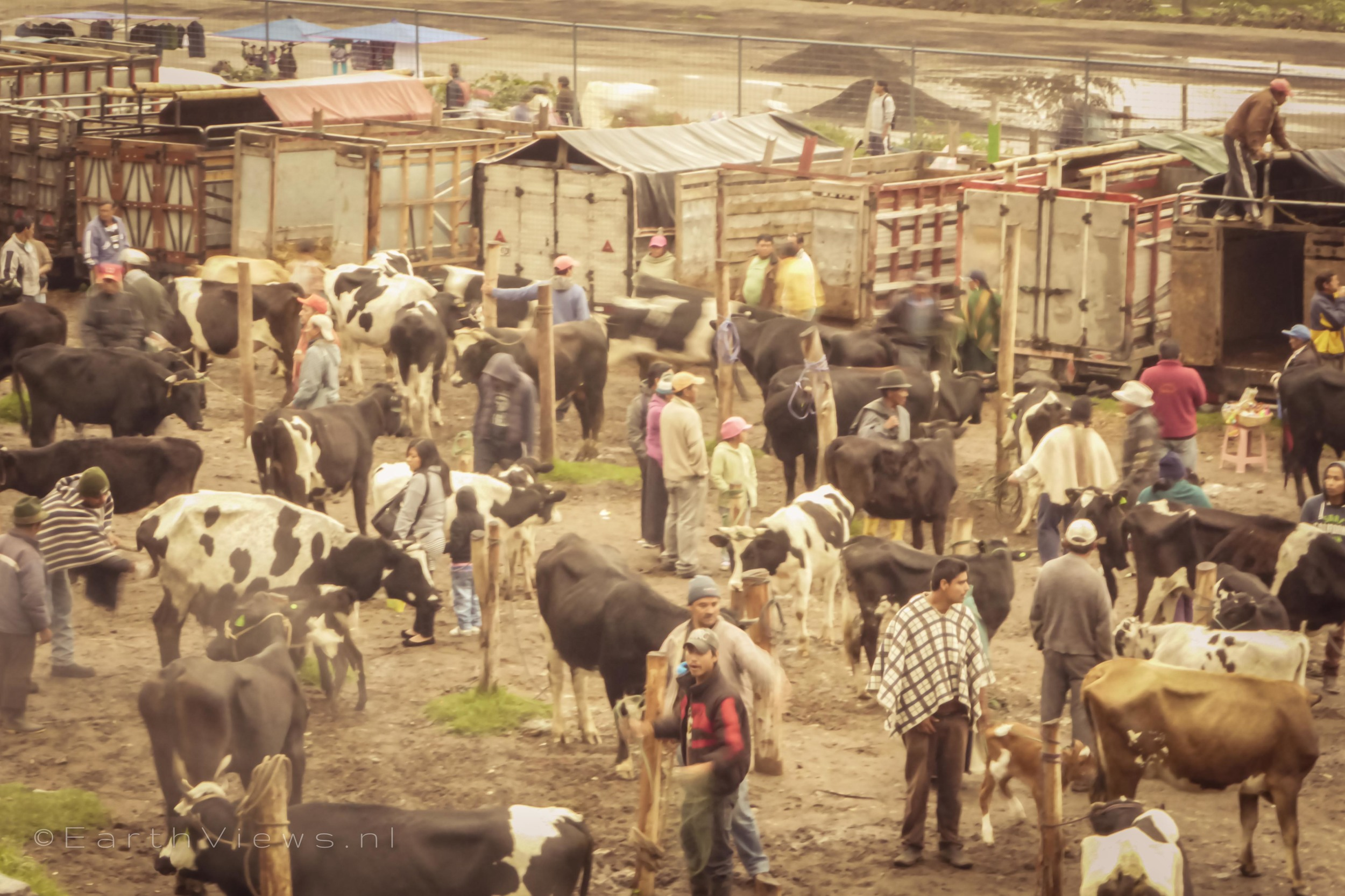 Overview on the animal market.