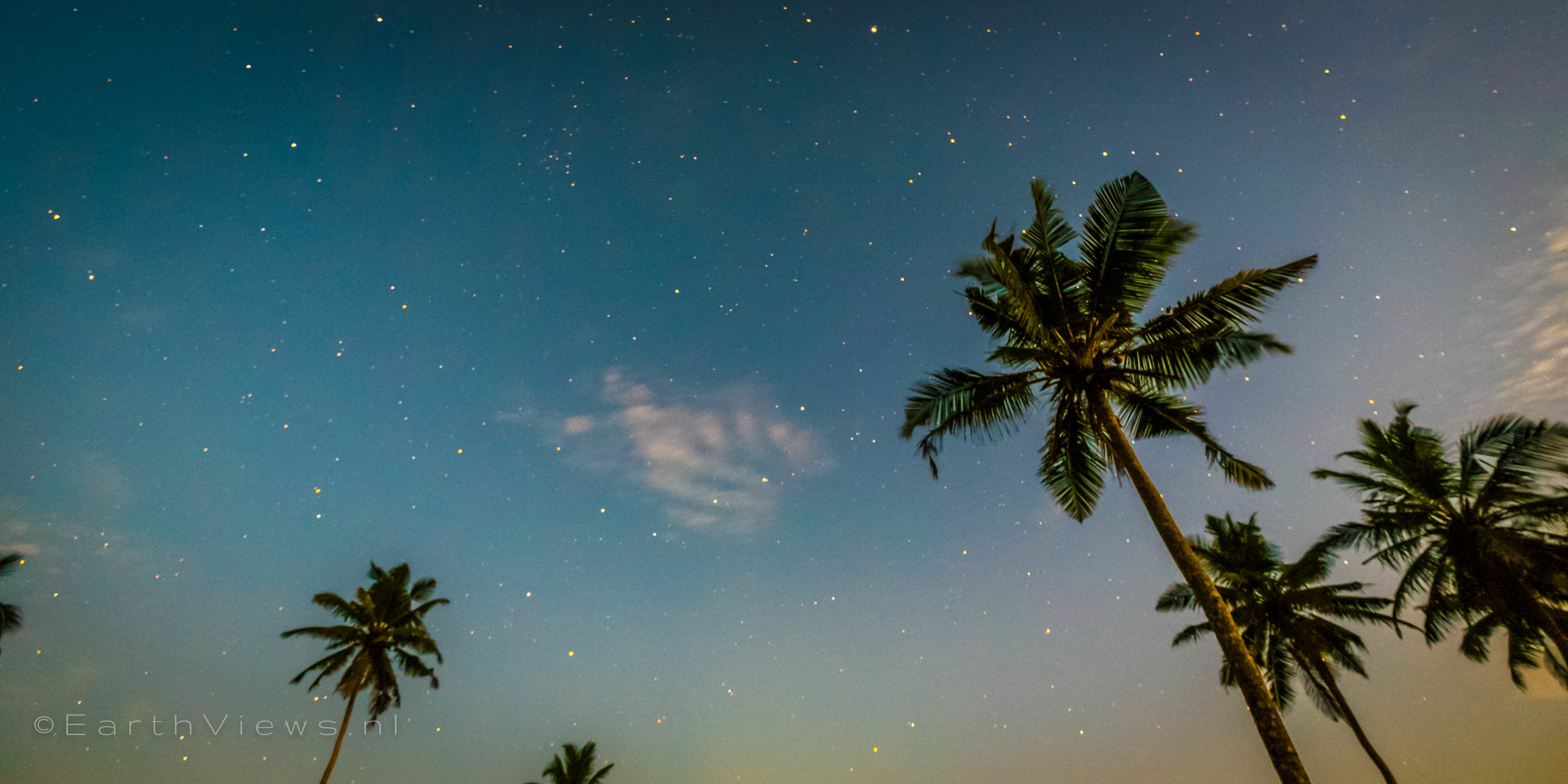 Palm trees against a night sky during morning twilight at Weligama, Sri Lanka.