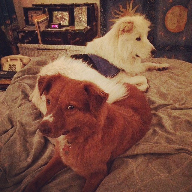 Kameo & Finnley on my bed 6 June 2015 photo by Arlene.jpg