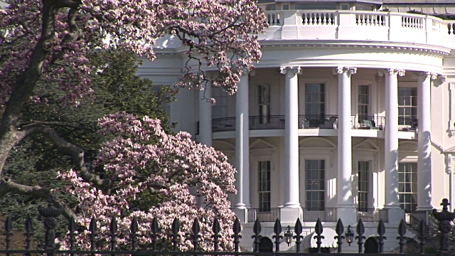 Cherry Blossoms at the White House.