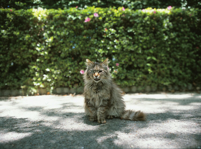Cat with a black eye (Mamiya 645, 45mm lens, Velvia 100)