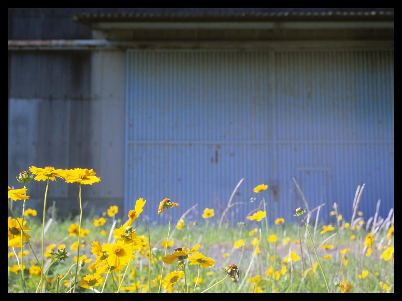 factory flowers (Mamiya Standard 23 6x7 Velvia 100)