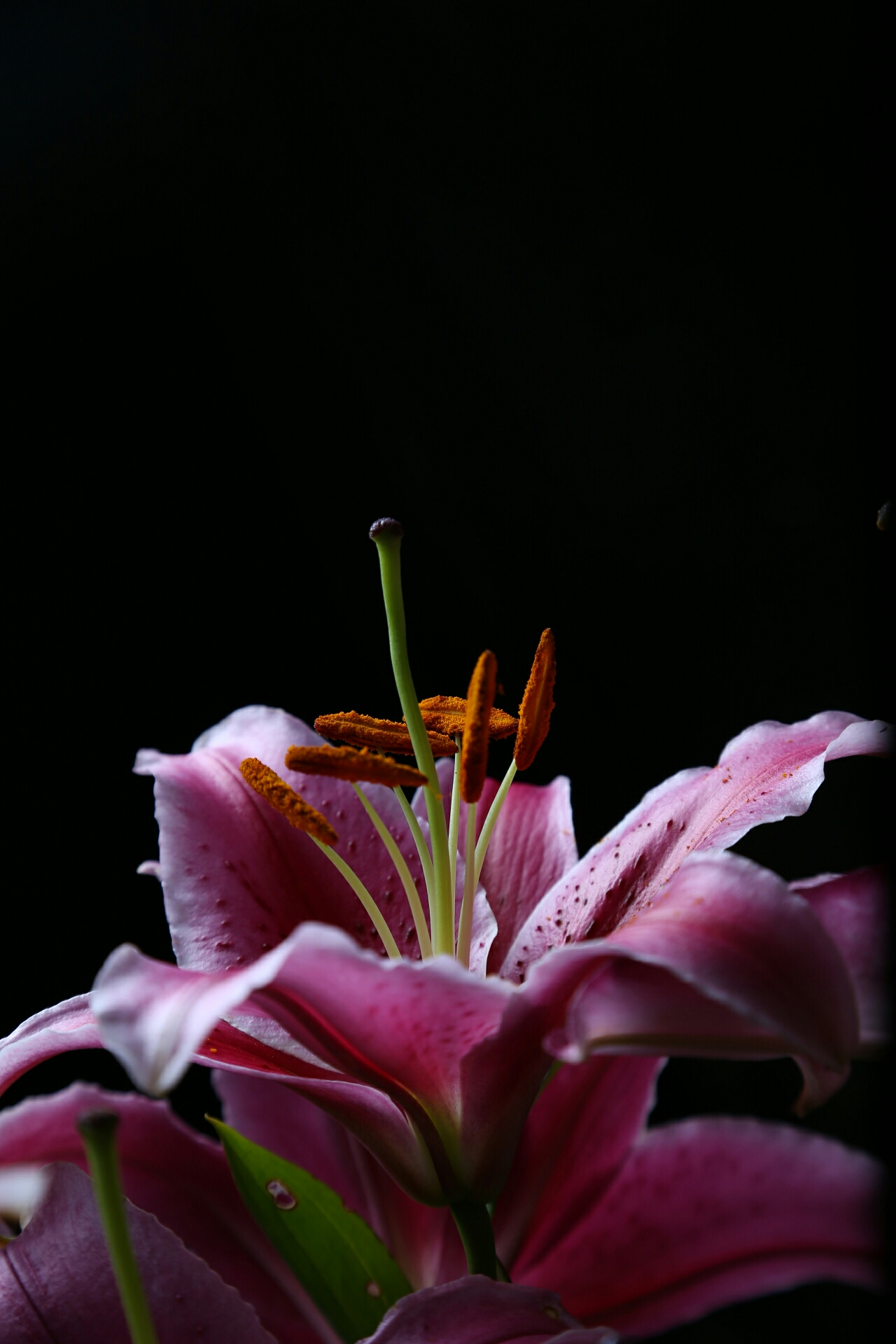 lily by night (Canon 6D)