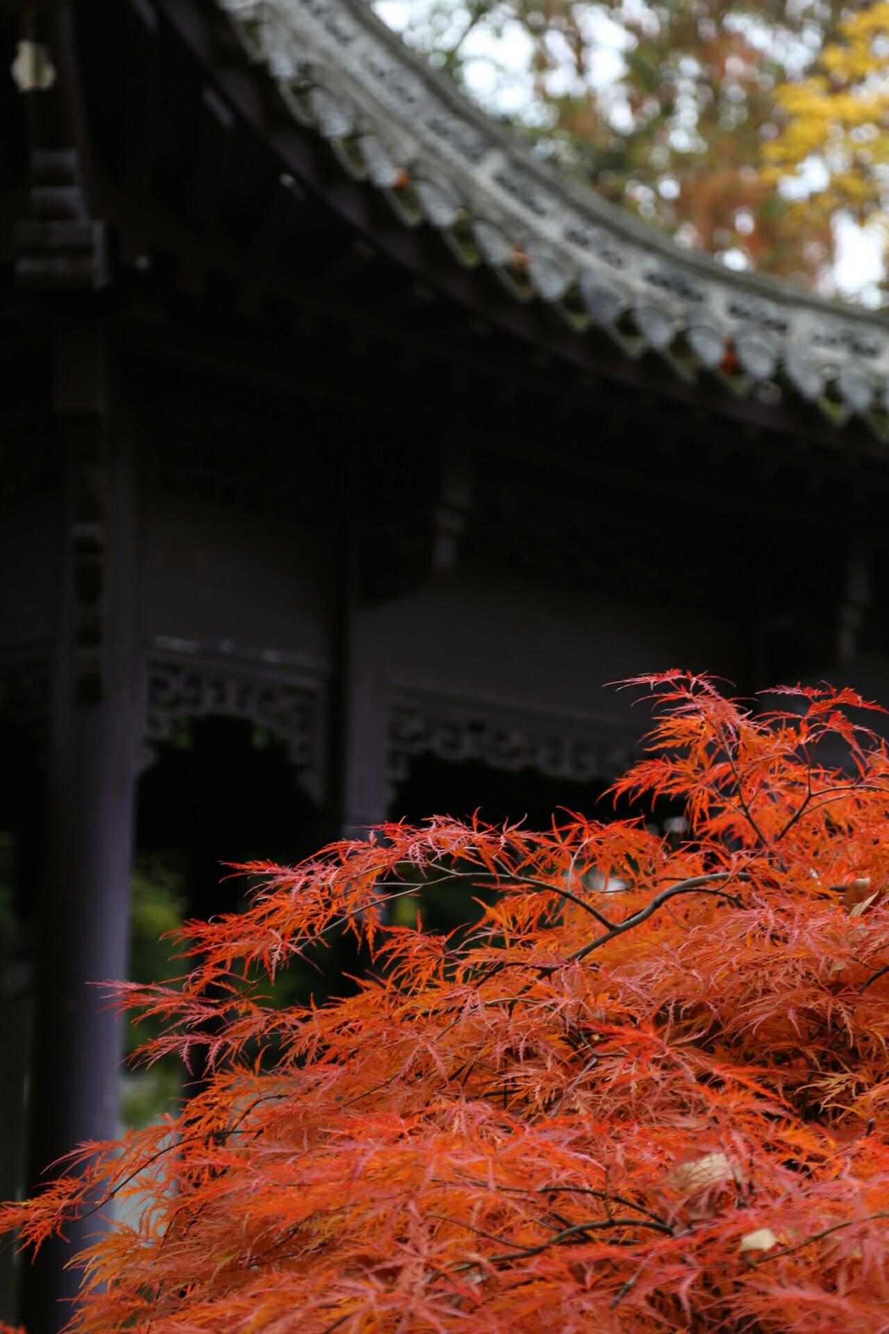 Autumn in the Chinese garden