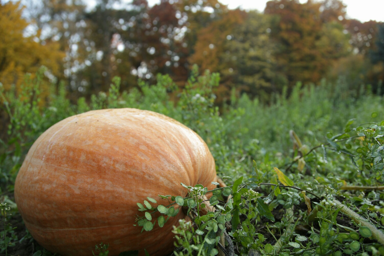it must feel awful to be the only pumpkin that didn't get picked for Halloween.
