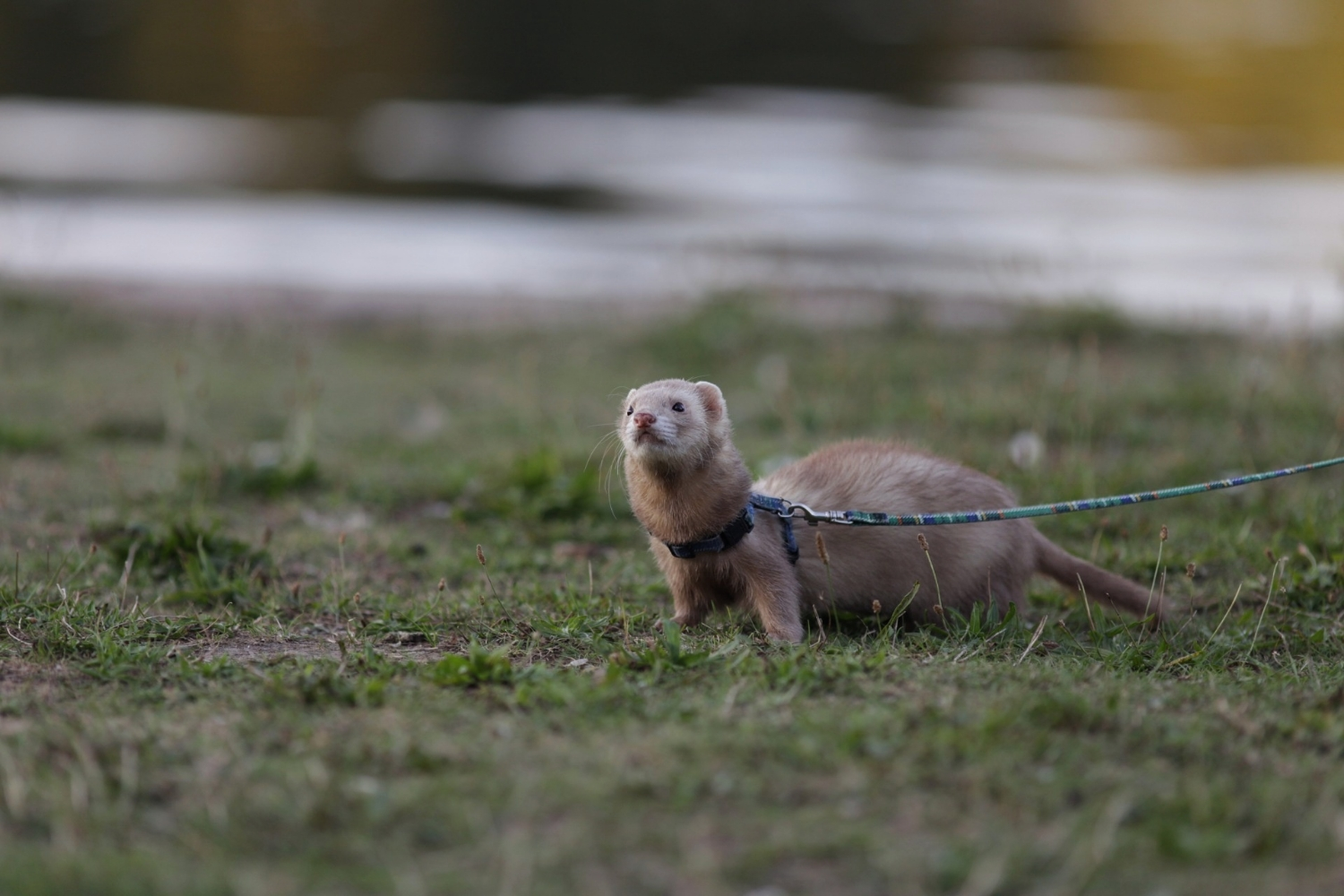 ferreting about!