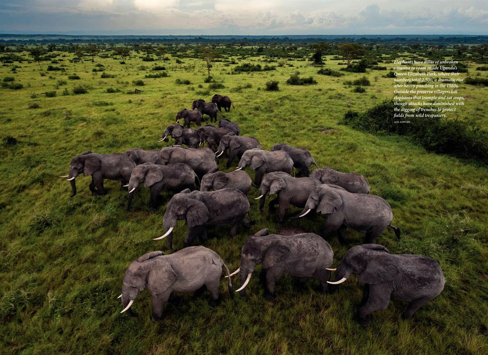 National Geographic,  November 2011,Photo by Joel Sartore