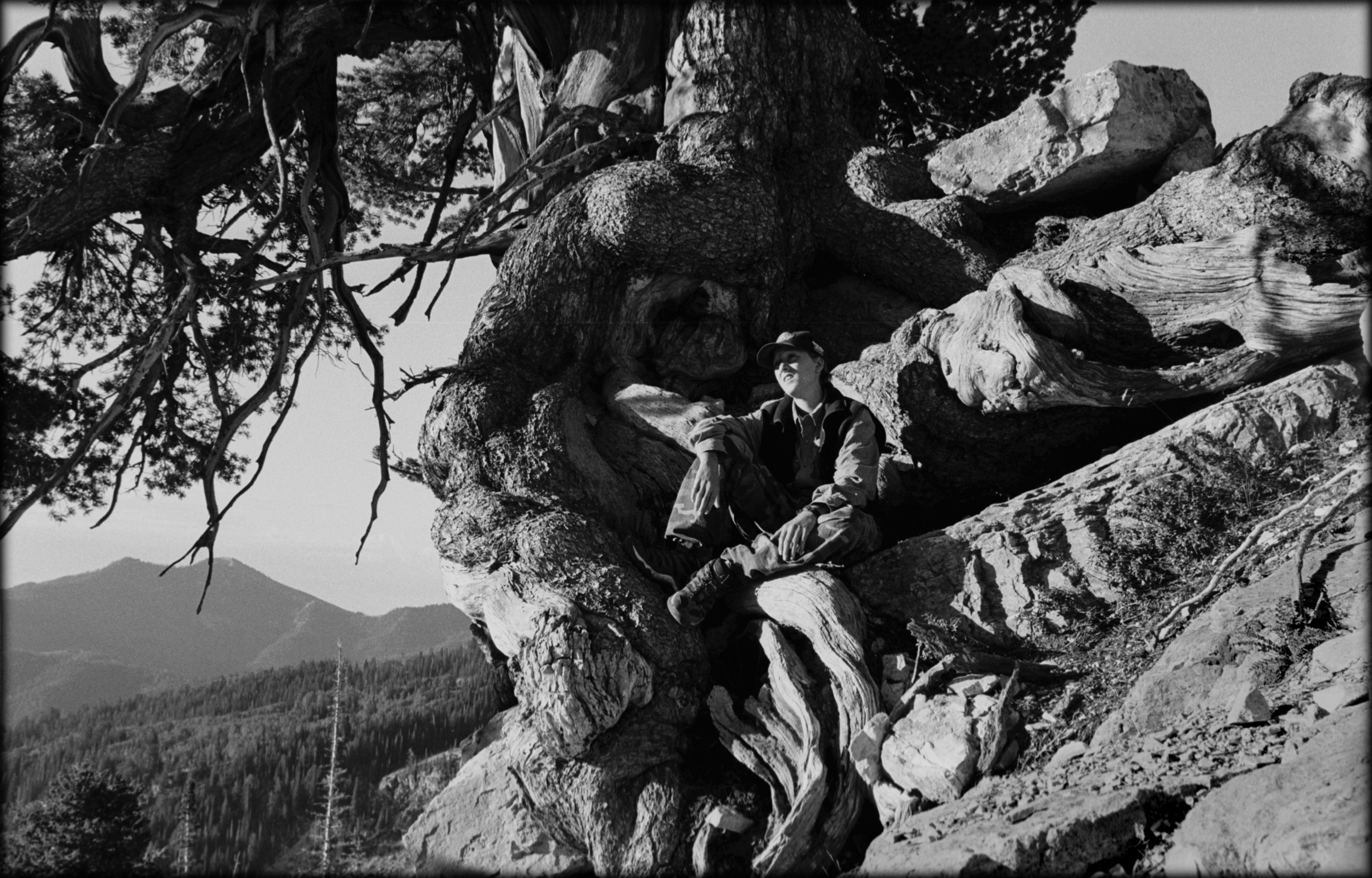 Limber pine.bw.james root.jpg