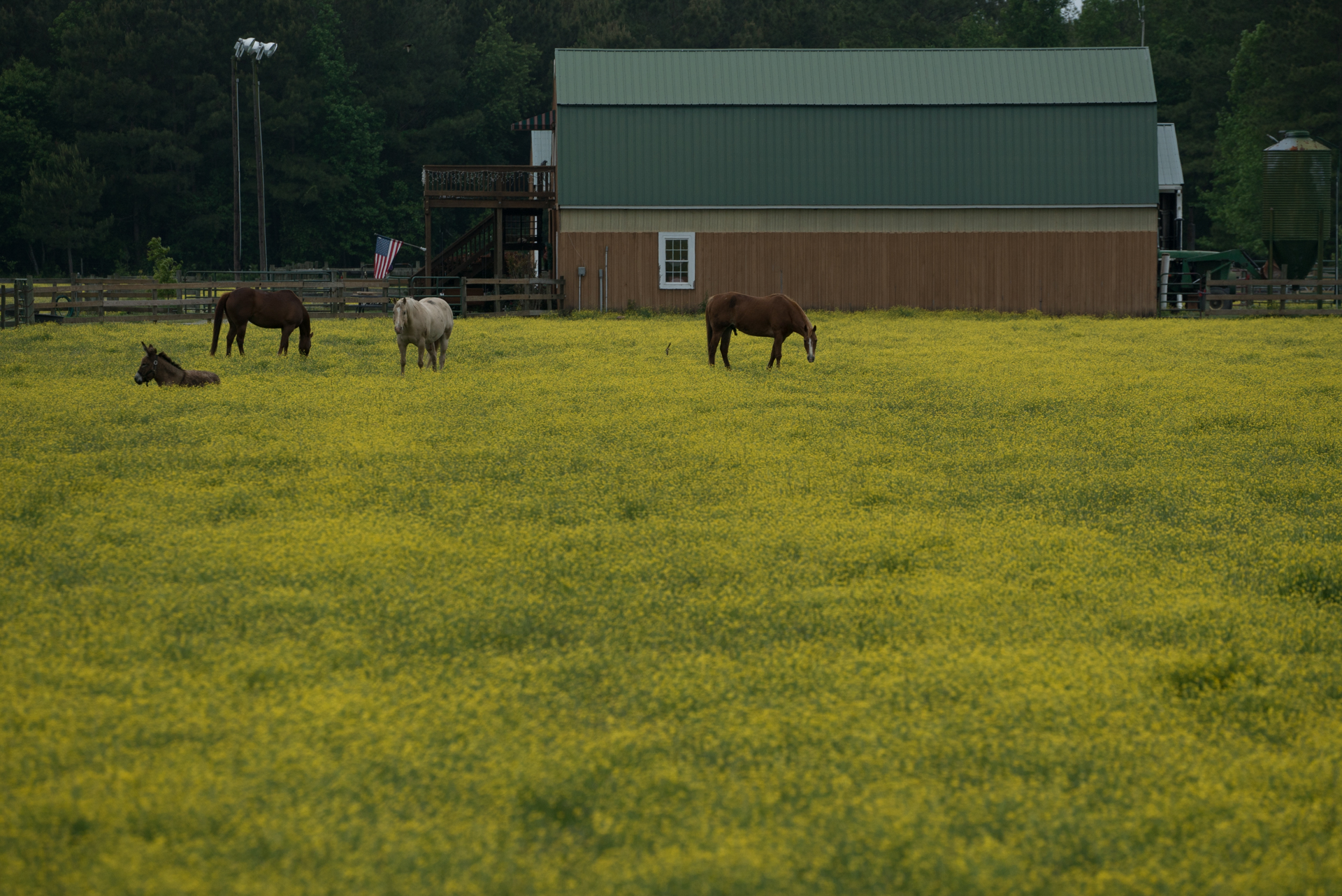 Map:2.  Farm near Belhaven, North Carolina