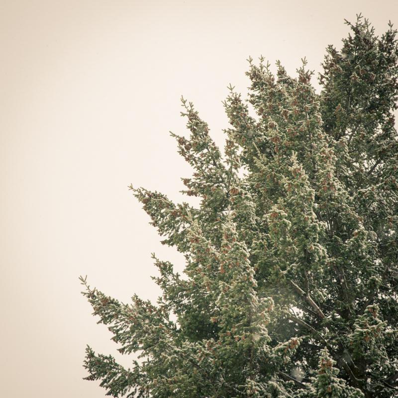 steph-in-spokane_8401607820_o.jpg