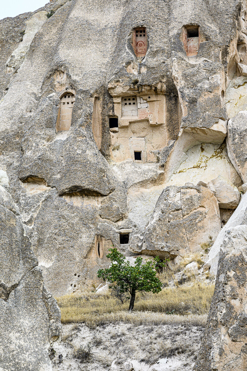 A Tree Grows in Cappadocia, Turkey