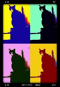 Possum Cat in Warhol. I take many pics of your pets and mine!