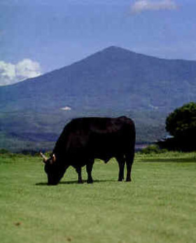 In Business magazine: Bull Business