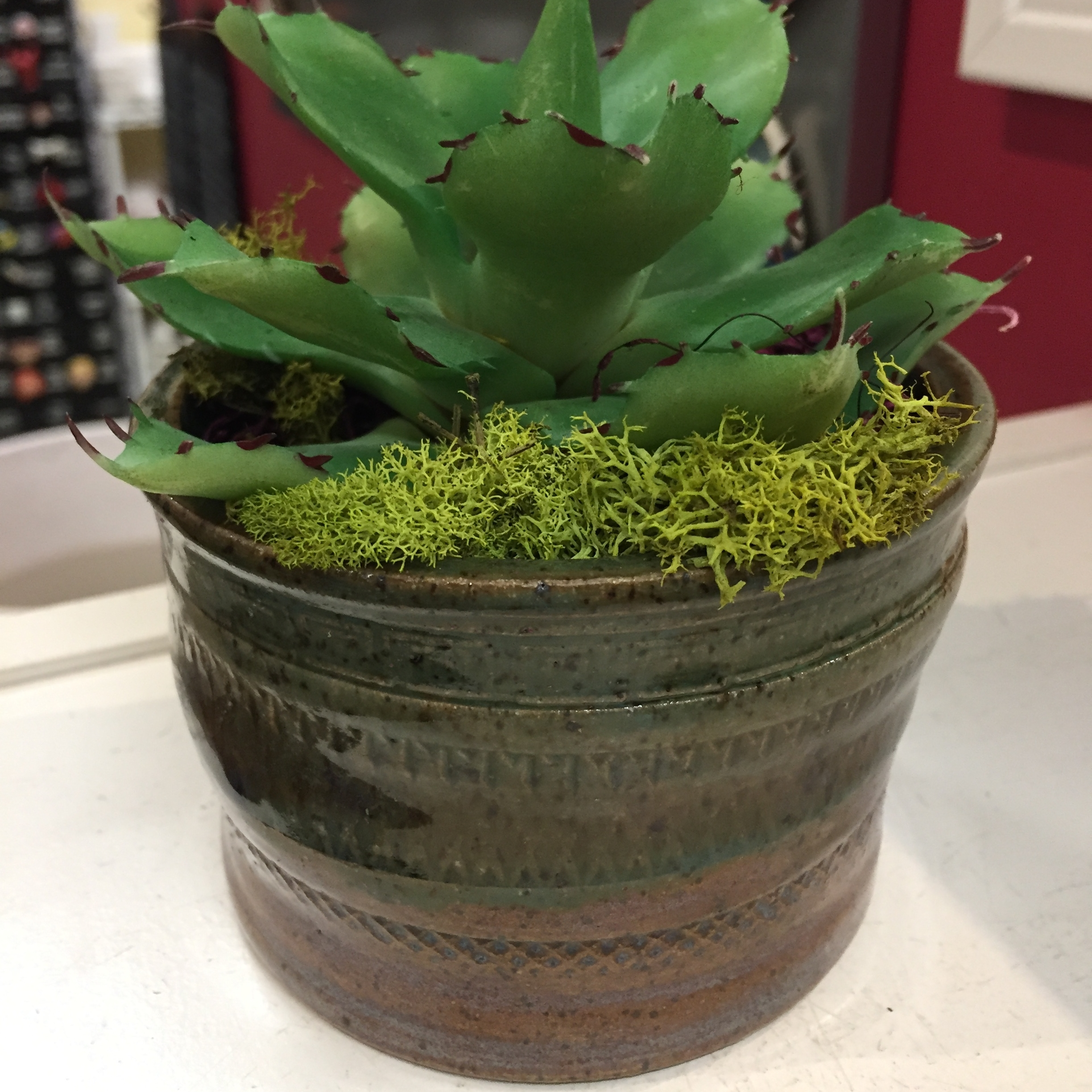 Fired, glazed and happy as a succulent planter.