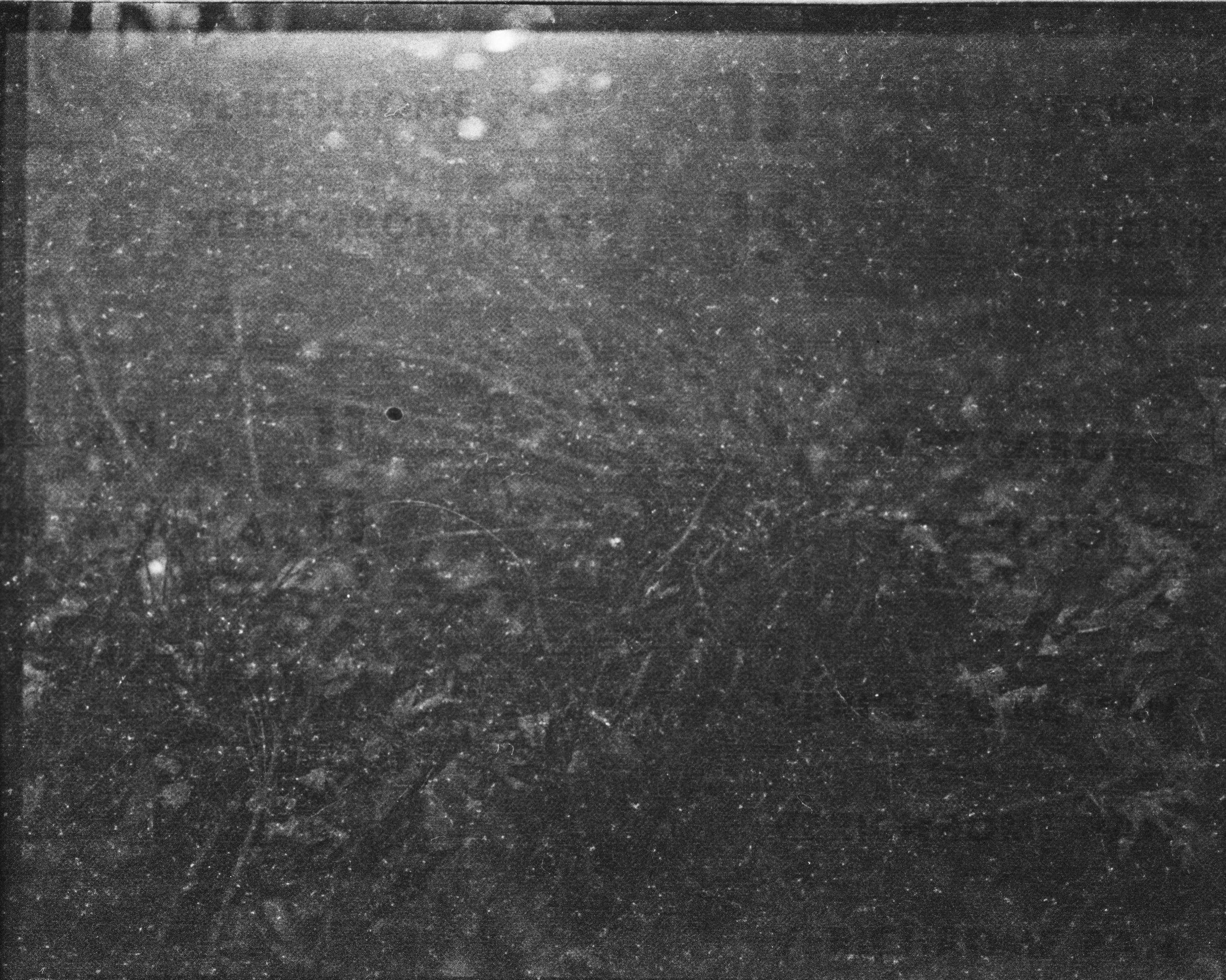 lydiasee-creekoffspringdale2014-color120mm-batch139.JPG