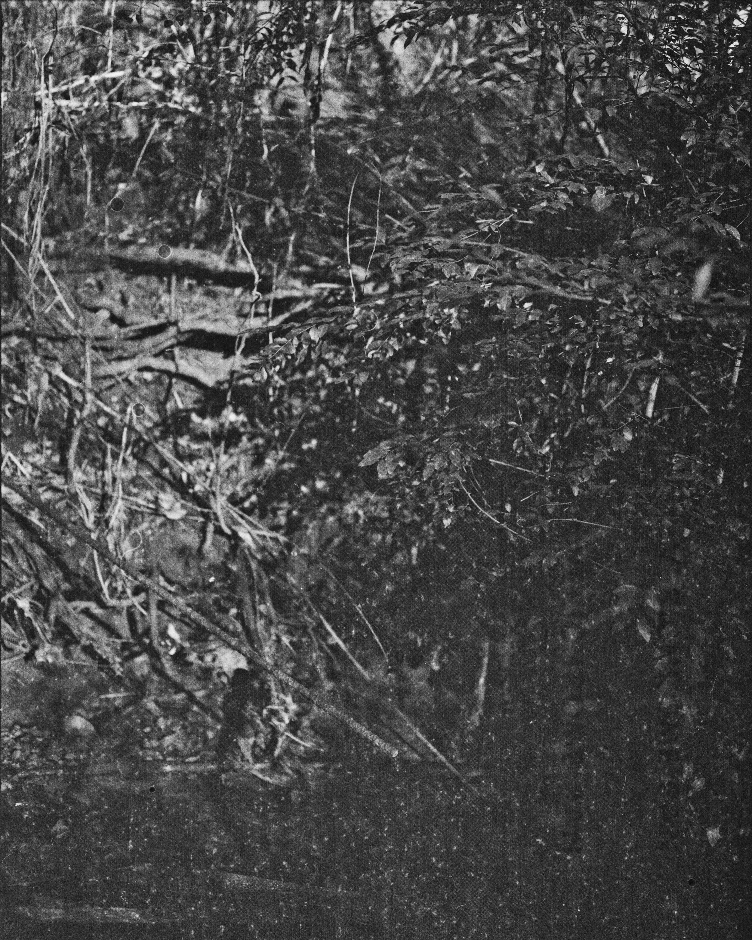 lydiasee-creekoffspringdale2014-color120mm-batch138.JPG