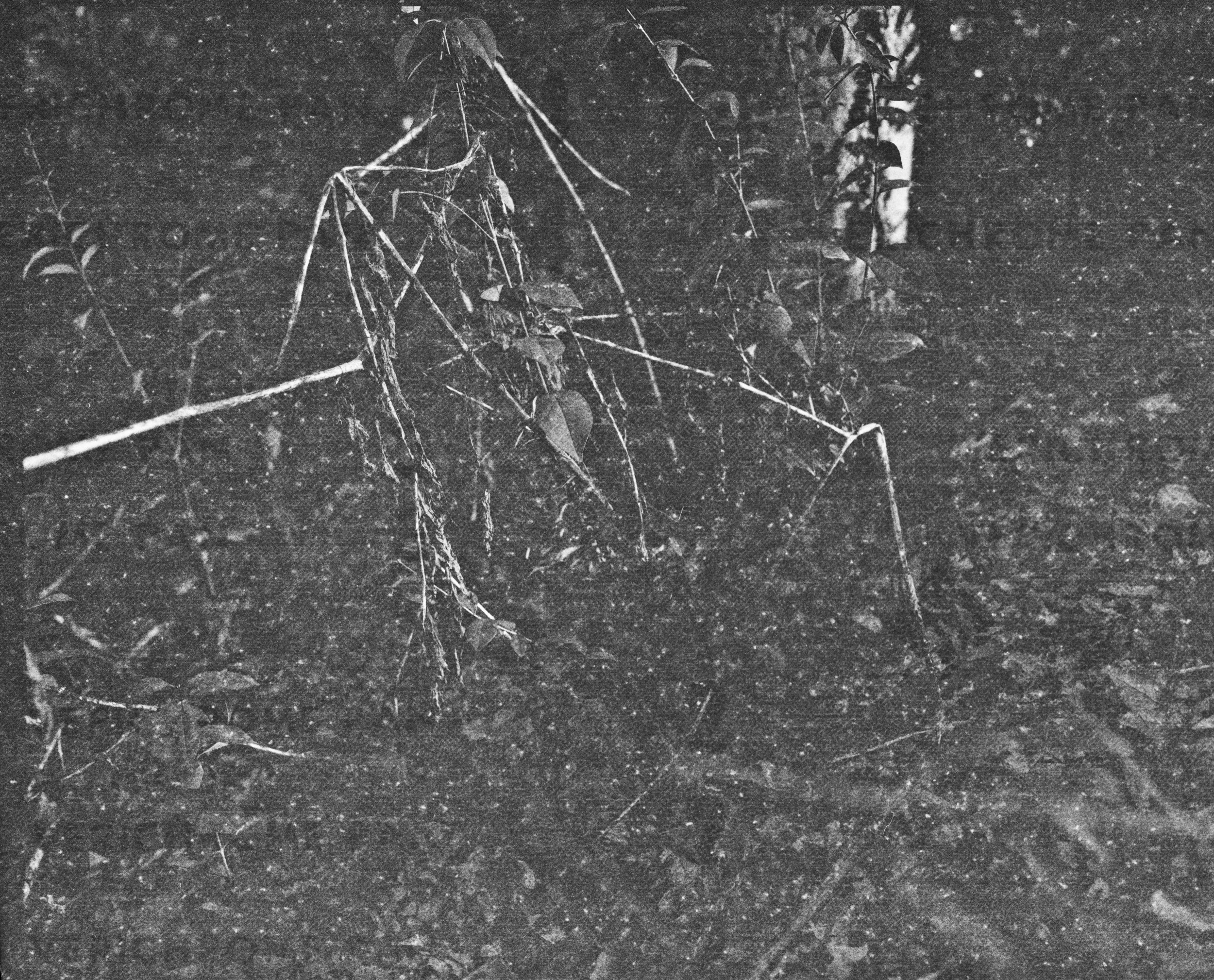 lydiasee-creekoffspringdale2014-color120mm-batch141.JPG