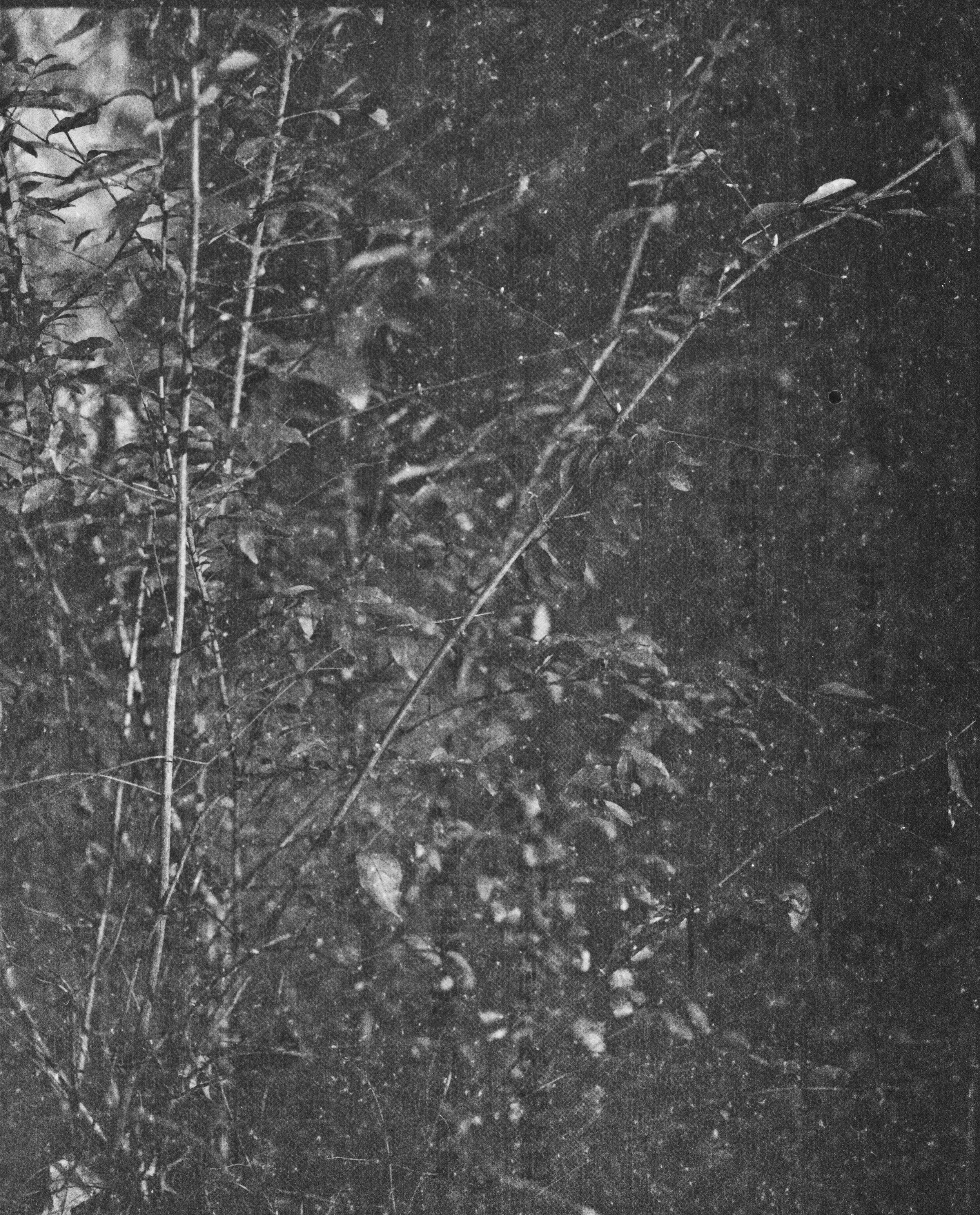 lydiasee-creekoffspringdale2014-color120mm-batch142.JPG