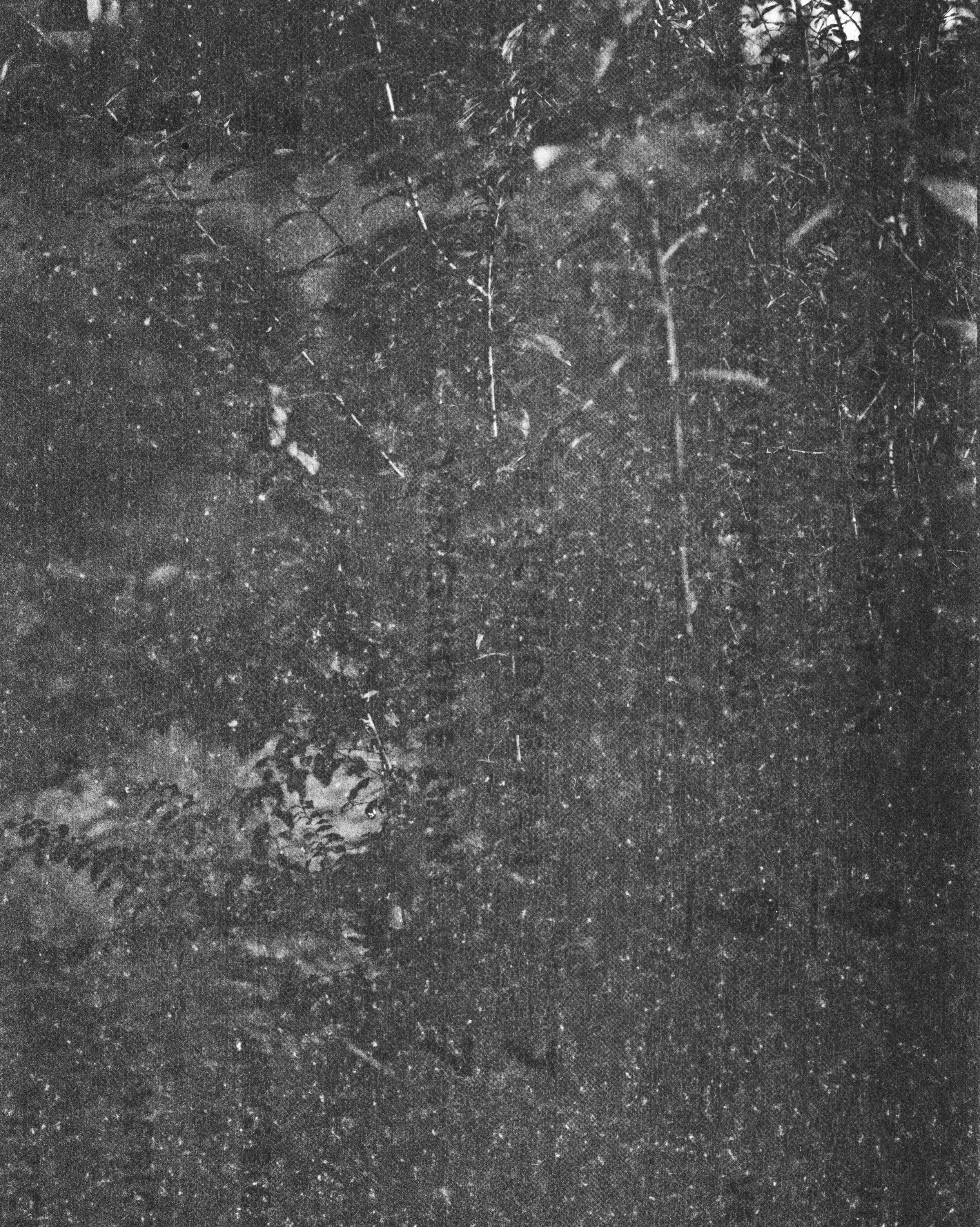 lydiasee-creekoffspringdale2014-color120mm-batch144.JPG